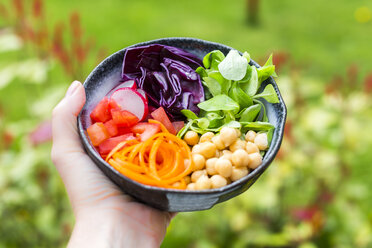 Rainbow salad in a bowl with chickpeas, tomatoes, carrots, red cabbage, red radishes, lettuce - SARF002697