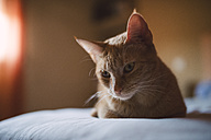 Portrait of cat lying on bed - RAEF001080