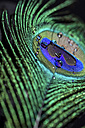 Feather and water drops, close-up - JUNF000519