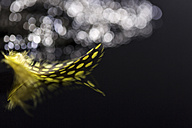 Feather and water drops, close-up - JUNF000522
