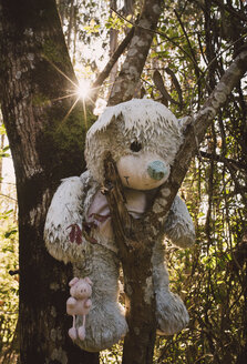 Disturbing teddy bear hanging on a tree in the forest - RAEF001082