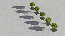 Row of five sugar maples on a square seen from above, 3D Rendering - UWF000860