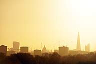 UK, London, flock of birds in front of skyline with The Shard in morning light - BRF001333