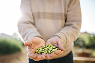 Hands of senior man holding peeled beans - JRFF000590