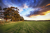 Scotland, East Lothian, field of grass at sunset - SMAF000460
