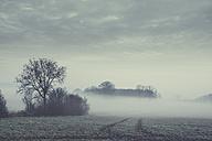 Gernany, North Rhine-Westphalia, Morning fog over fields - DWIF000727