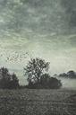 Gernany, North Rhine-Westphalia, Morning fog over fields - DWIF000730