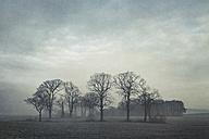 Gernany, North Rhine-Westphalia, Group of trees in morning fog - DWIF000733