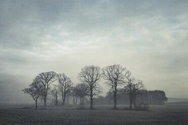 Gernany, North Rhine-Westphalia, Group of trees in morning fog - DWIF000733