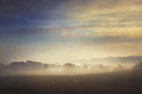 Gernany, North Rhine-Westphalia, Morning fog over fields - DWIF000736