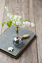 White lyre-flowers in a vase - MYF001474