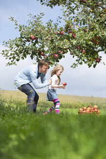 Little girl and father picking apples from tree - MAEF011609