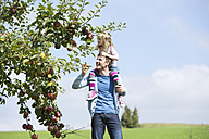 Little girl picking an apple from tree, girl sitting on shoulders of the father - MAEF011612