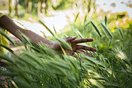 Hand of woman touching grasses - GIOF001022
