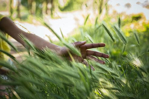 Hand of woman touching grasses - GIOF001022