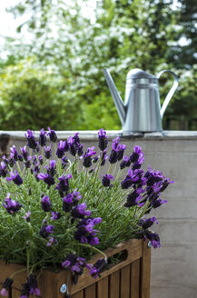 Blossoming lavender on balcony - JFEF000795