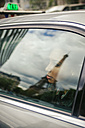 France, Paris, young woman looking through car window - ZEDF000134