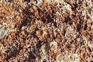 Rusty weathered shell limestone, close-up - BZF000282
