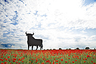 Bull shaped sign in poppy field, Spain, Toledo - ERL000173