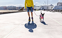 Inline-skater going walkies with his bull terrier - MGOF001841