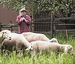 Shepherd standing with flock of sheep - UUF007312