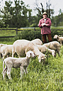 Shepherd with flock of sheep on pasture - UUF007315
