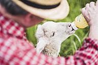 Shepherd feeding lamb with milk bottle - UUF007318