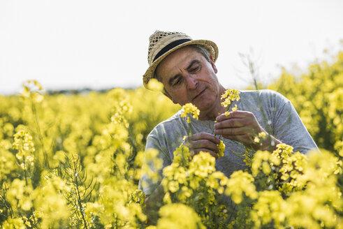 Farmer in field examining rape blossom - UUF007321