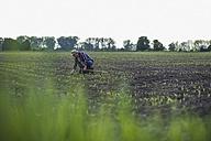 Farmer in a field examining crop - UUF007339