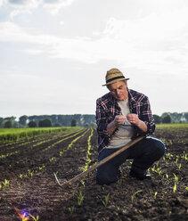 Farmer in a field examining crop - UUF007345