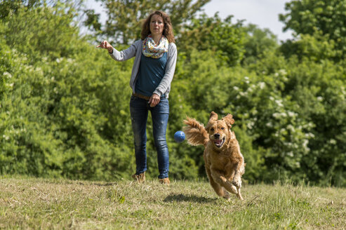 Woman throwing ball, golden retriever running on meadow - FRF000438