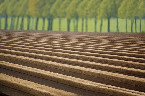 Asparagus field in spring - KLRF000319