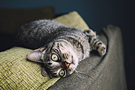 Tabby cat relaxing on a couch - RAEF001167