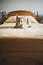 Cat lying on bed - RAEF001170