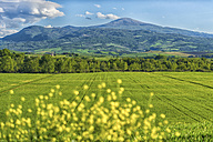 Italy, Tuscany, Val d'Orcia, view to fields and rolling landscape in spring - LOMF000268