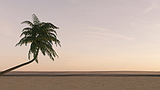 Palm tree on the beach at dusk, 3D rendering - UWF000888