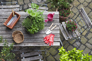 Gardening, different medicinal and kitchen herbs and gardening tools on garden table - GWF004707