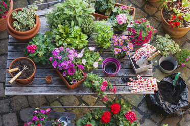 Gardening, different medical and kitchen herbs and gardening tools on garden table - GWF004713