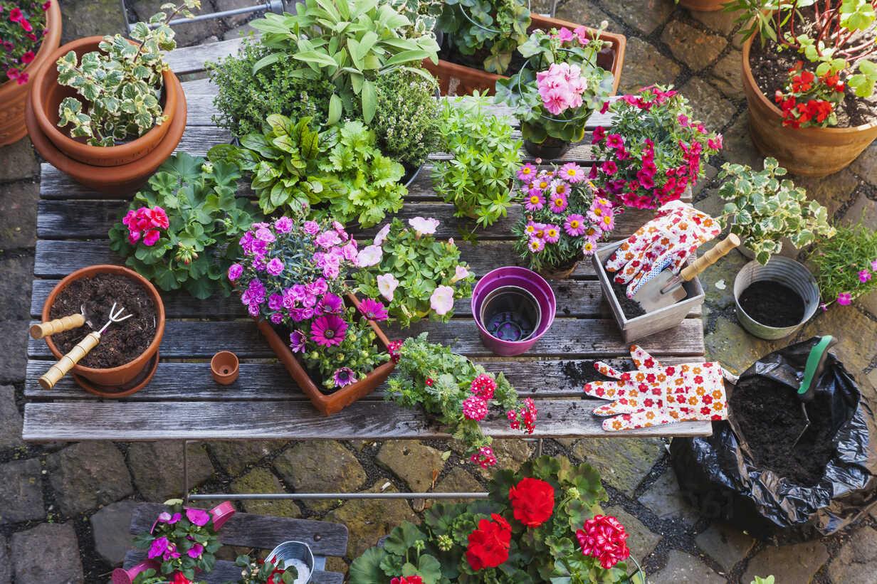 Gardening, different medical and kitchen herbs and gardening tools on garden table - GWF004713 - Gaby Wojciech/Westend61