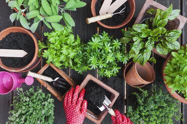 Gardening, medicinal and kitchen plants - GWF004716
