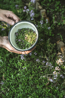 Woman's hands holding bowl of freshly picked thyme - DEGF000814