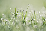 Dew drops on grass - RUEF001701