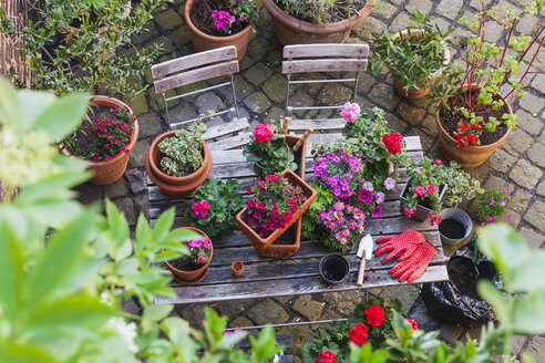 Gardening, different spring and summer flowers, gardening tools on garden table - GWF004720