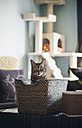 Tabby cat sitting in a basket at home - RAEF001183