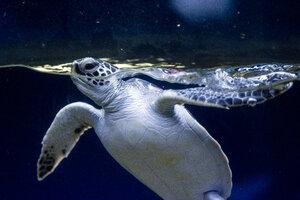 Hawaii, turtle - NGF000344