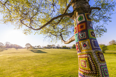 Tree trunk covered with crochet - WDF003641