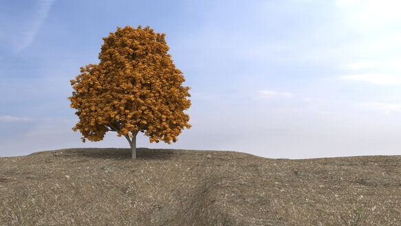 Autumnal sugar maple on high plateau, 3D Rendering - UWF000903