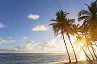 Dominican Rebublic, Tropical beach with palm trees at sunset - HSIF000457