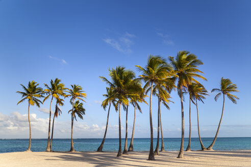 Dominican Rebublic, Tropical beach with palm trees - HSIF000460
