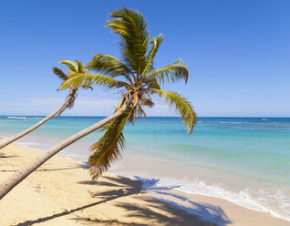 Dominican Rebublic, Tropical beach with palm trees - HSIF000469